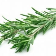 Rosemary and recipes with it from potionsquirrel.ru
