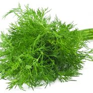 Dill and recipes with it from potionsquirrel.ru