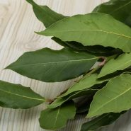 Laurel leaf and recipes with it from potionsquirrel.ru