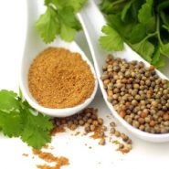 Coriander and recipes with it from potionsquirrel.ru