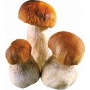 Белые грибы и рецепты с ними от potionsquirrel.ru