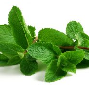 Mint and recipes with it from potionsquirrel.ru