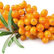 Sea buckthorn and recipes with her from potionsquirrel.ru