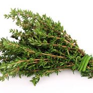 Thyme and recipes with it from potionsquirrel.ru