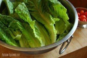 Полезные свойства салата Романо