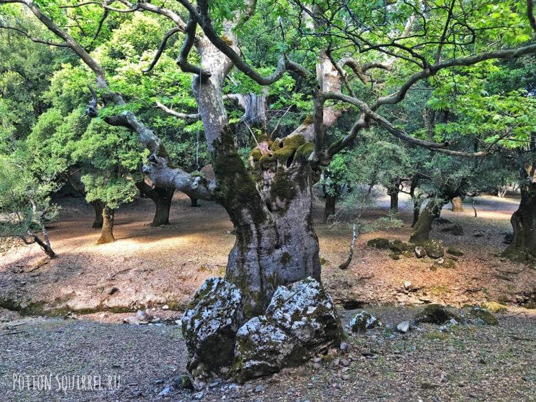 В жизни никогда не видела таких деревьев, а вы?
