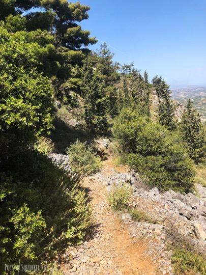 Кипарисы. Юхта, Крит