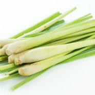 Лемонграсс - лимонная трава и рецепты с ней от potionsquirrel.ru